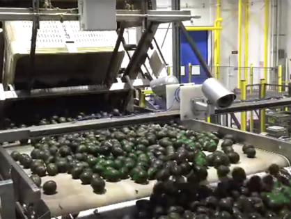Henry Avocado Corp's is recalling avocados because of possible listeria contamination